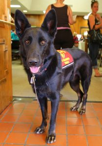 Service animals are allowed in emergency shelters.