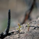 New Growth on the foothilss fire one year later