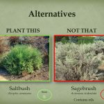 Plant saltbush instead of sagebrush.