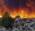 Wildfire in the sagebrush.