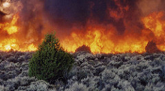 Wildfire plays an important role in the health of Idaho's rangelands.