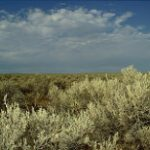 Sagebrush steppe ecosystem is a fire-based ecosystem.