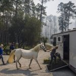 Once an evacuation notice is issued load larger animals into trailers.